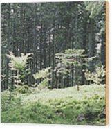 Underwood Wood Print