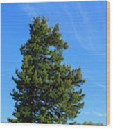 Usa, Oregon, Columbia Gorge Wood Print