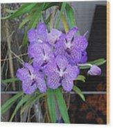 Vanda Orchid Wood Print