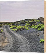 Vineyard On Lanzarote Wood Print