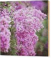 Vintage Lilac Wood Print