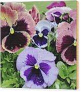 Viola 'coastal Sunrise' Flowers Wood Print