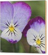 Viola Named Sorbet Lemon Blueberry Swirl Wood Print