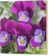 Viola Named Sorbet Plum Velvet Jump-up Wood Print