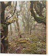 Virgin Mountain Rainforest Of Marlborough Nz Wood Print
