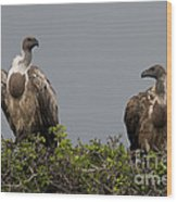 Vultures With Full Crops Wood Print
