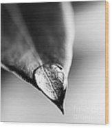 Water Drop On Leaf Wood Print
