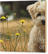 West Highland White Terrier Painting Wood Print