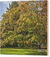 Westonbirt Arboretum Wood Print