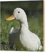 White Duck Wood Print