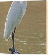 Magnolia White Heron Wood Print