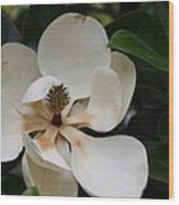 White Magnolia  Wood Print