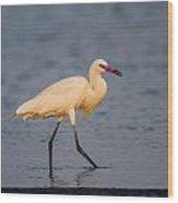 White Morph Redish Egret Wood Print
