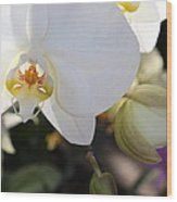 White Orchid Three Wood Print