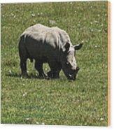 White Rhinoceros Calf  Wood Print