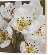 Beautiful White Spring Blossom Wood Print