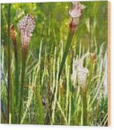 White-topped Pitcher Plant Wood Print