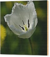 White Tulip On The Green Background Wood Print