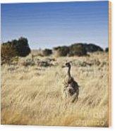 Wild Emu Wood Print by Tim Hester