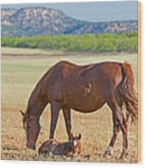 Wild Horses Mother And Foal Wood Print