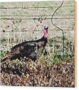 Wild Turkey Wood Print by Thea Wolff