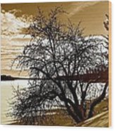 Willow On Silver Lake Wood Print