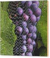 Wine In A Web Wood Print