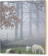 Winter Lambs Foggy Day Wood Print