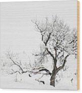 Winter Sage Wood Print