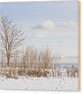 Winter Shore Of Lake Ontario Wood Print by Elena Elisseeva