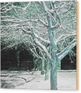 Winter Trees Wood Print by Guy Ricketts