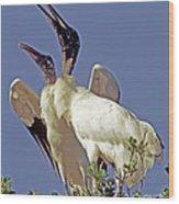 Wood Stork Courtship Display Wood Print