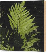 Woodland Fern Wood Print