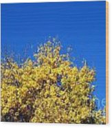 Yellow Autumn Tree Wood Print
