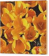 Yellow Crocus Flowers In Sunlight Wood Print