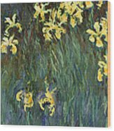 Yellow Irises  Wood Print