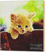 Yellow Kitten Wood Print