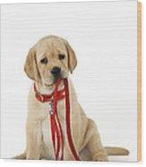 Yellow Labrador Puppy Wood Print