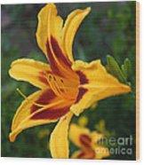 Yellow Tiger Lily Wood Print