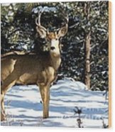 Young Buck Wood Print by Claudette Bujold-Poirier
