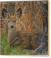 Young Mulie Wood Print
