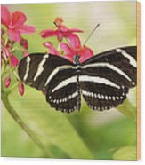 Zebra Longwing Butterfly Wood Print