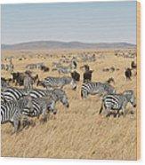 Zebra Migration Maasai Mara Kenya Wood Print