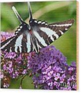 Zebra Swallowtail Butterfly At Butterfly Bush Wood Print