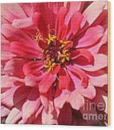 Zinnia From The Whirlygig Mix Wood Print