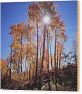 California, Sierra Nevada Mountains Wood Print