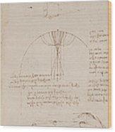 Drawings By Leonardo Da Vinci Wood Print