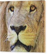 Lion Dafrique Panthera Leo Wood Print