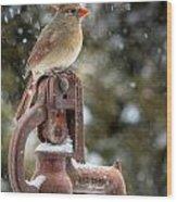 Ms Cardinal Wood Print