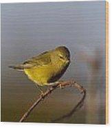 Orangecrowned Warbler Wood Print